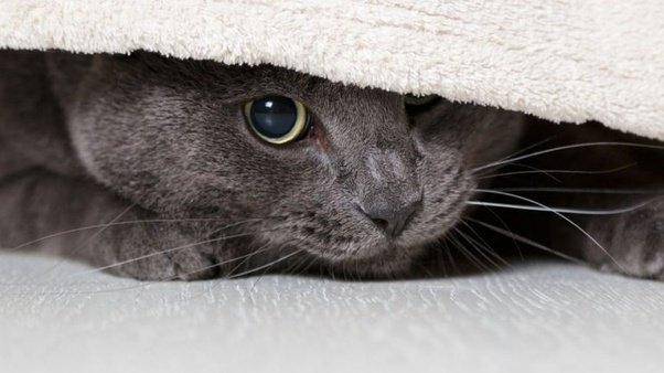 Stress bij katten Featured Image