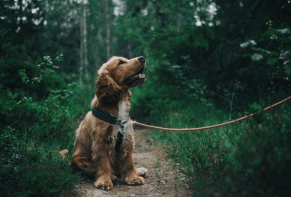 Blaasontsteking bij honden natuurlijk verhelpen