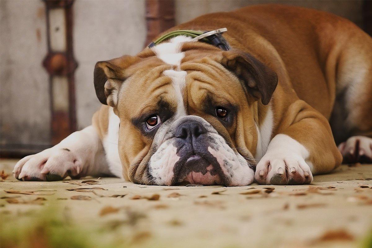 Diarree bij honden: hoe ga je daarmee om?