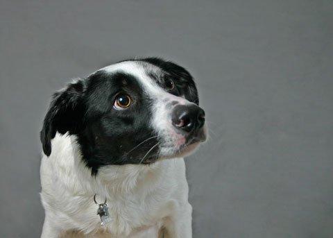 """Afbeeldingsresultaat voor oogwit hond"""""""