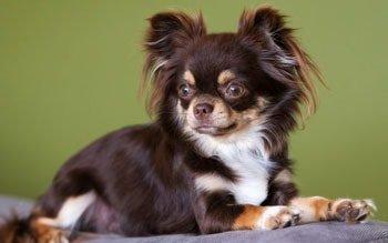 Eerste hulp bij incontinentie hond Featured Image