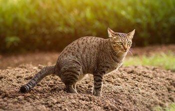 Bloed bij ontlasting kat Featured Image