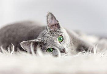 Nierfalen bij katten Featured Image