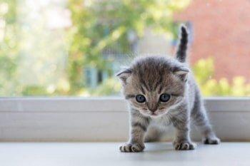 Kitten ontwormen: alles wat je moet weten