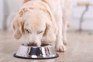 probiotica hond