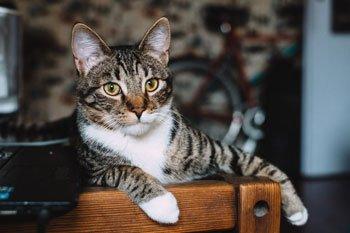 Probiotica kat: alles wat je moet weten Featured Image