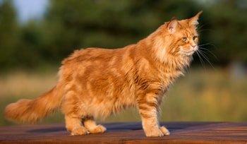 Zalmolie kat: een onmisbaar supplement Featured Image